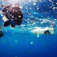 reducing plastic usage